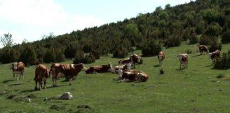 Agrosaveti - Stočarstvo i životna sredina 01