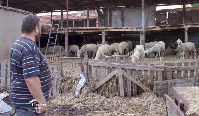 Agrosaveti - Svaštarenje i stočarstvo 06
