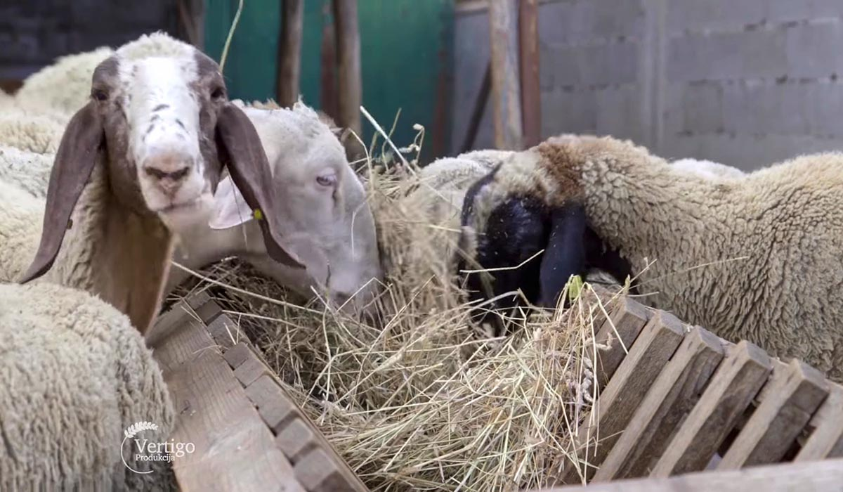 Agrosaveti - Svaštarenje i stočartvo 02
