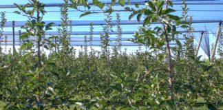 Agrosaveti - Trendovi u voćarstvu 04