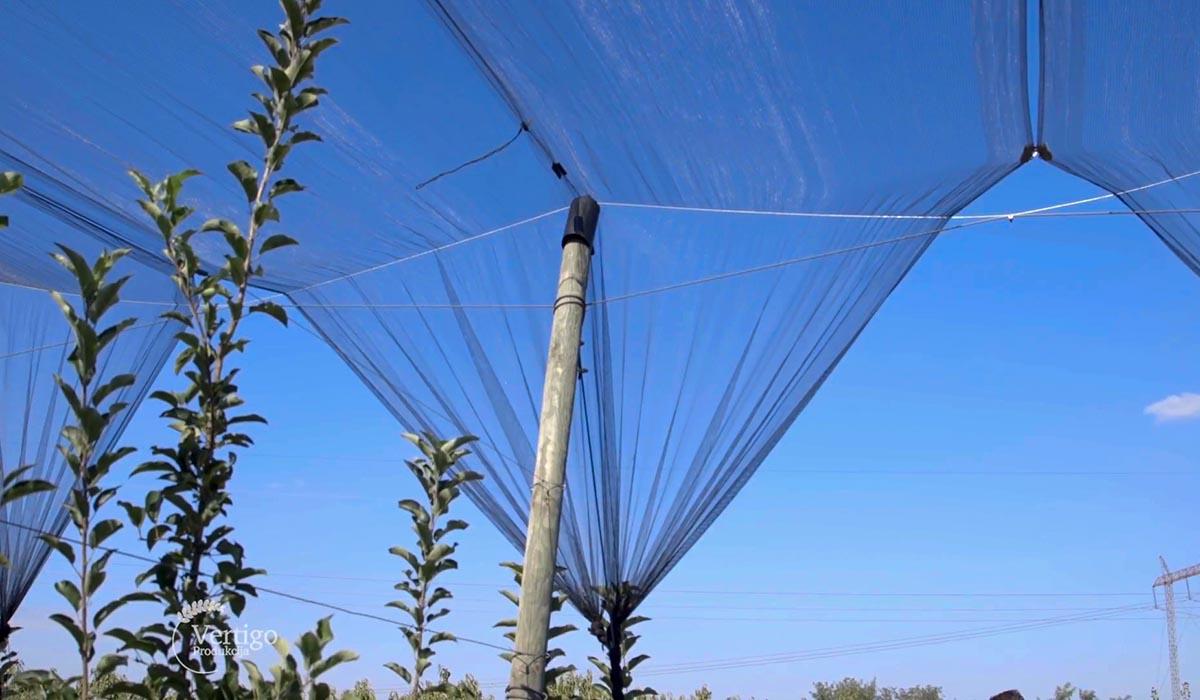 Agrosaveti - Uzgoj jabuka u selu Kamendol 05
