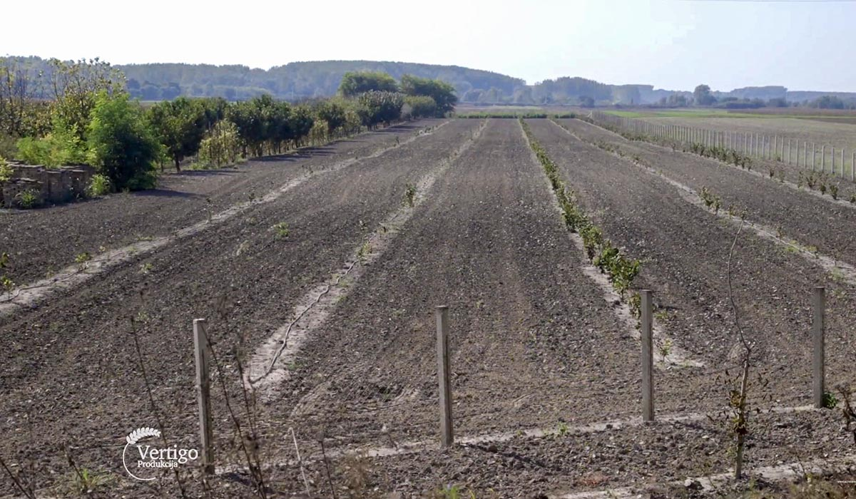 Agrosaveti - Zasadi mlade leske 05