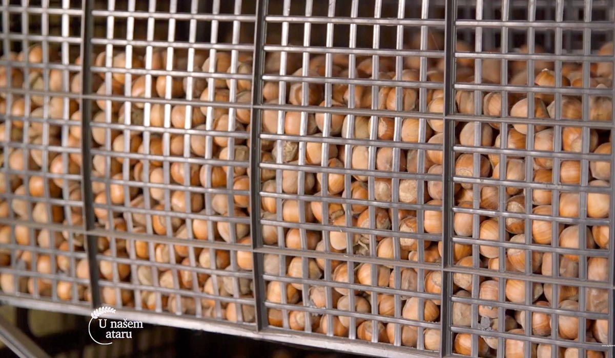 Agrosaveti - Zasadi mlade leske 06