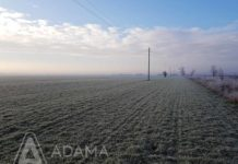 Agrosaveti---Adama---Igor-Dulic--Uljana-repica---Najlepsa-je-moja-njiva