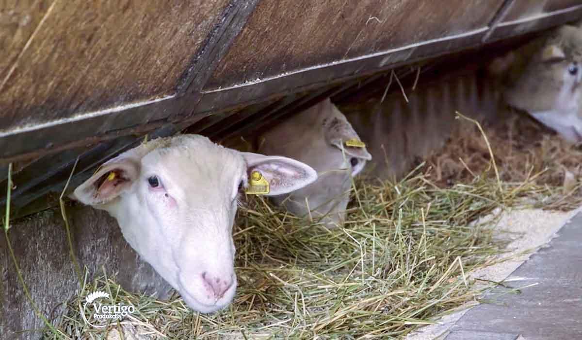 Agrosaveti - Farma Ile de France 04