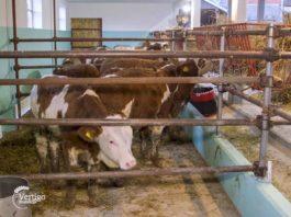 Agrosaveti - IPARD program 04