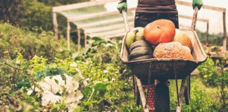 Agrosaveti - Mesec organske hrane 01