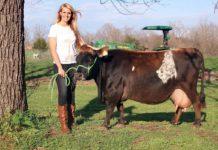 Agrosaveti - Mini krave 01