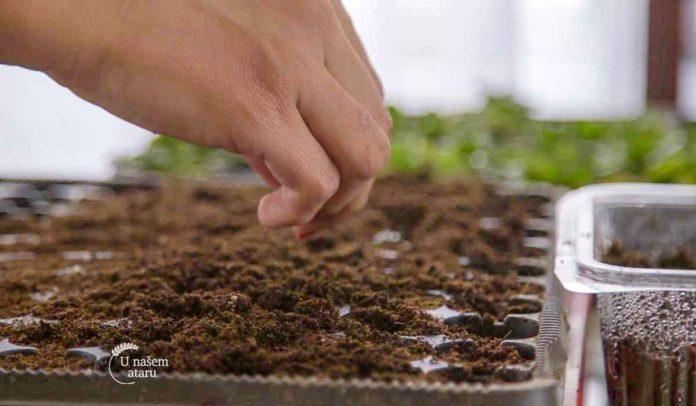 Agrosaveti - Nabavke semenskog materijala 01