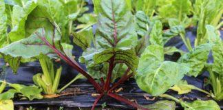 Agrosaveti - Organska proizvodnja u Pivnicama 03