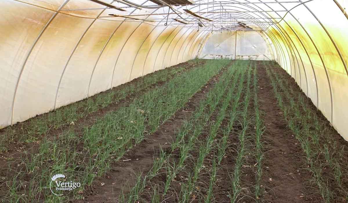Agrosaveti - Povrtarska proizvodnja Žuržuj 02