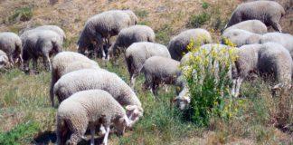 Agrosaveti - Pravilnik 01