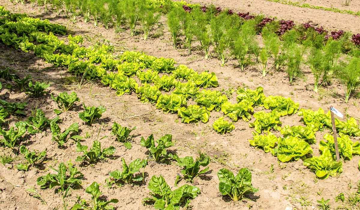 Agrosaveti - Prerađivački potencijal 01
