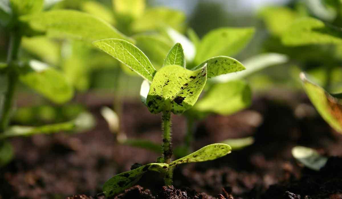 Agrosaveti - Prerađivački potencijal 02