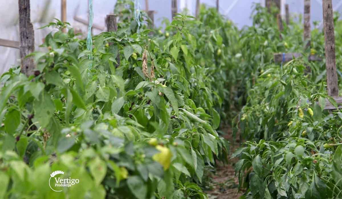 Agrosaveti - Proizvodnja domaće zimnice 05