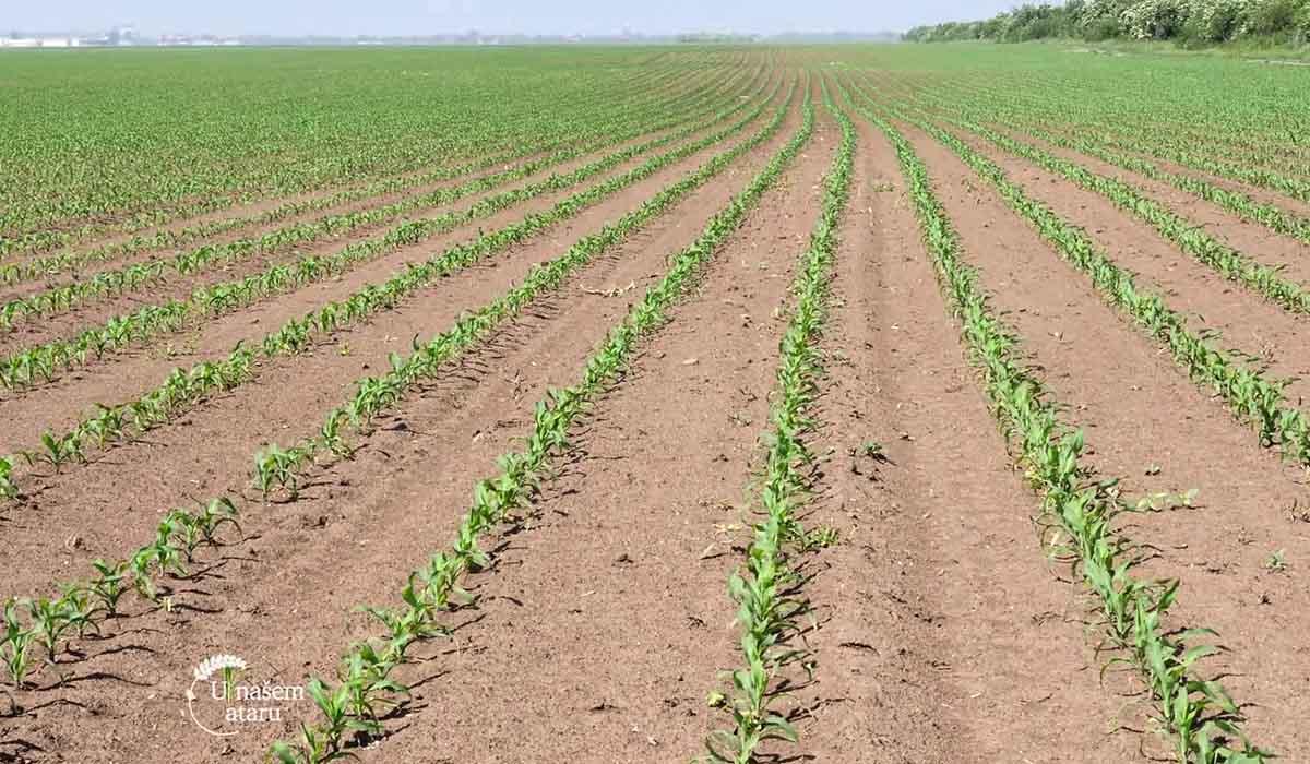 Agrosaveti - Rezistentnost korova na herbicide 03