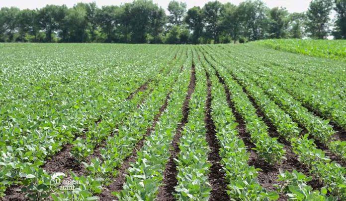 Agrosaveti - Rezistentnost korova na herbicide 05