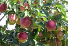 Agrosaveti - Srpski izvoz 01