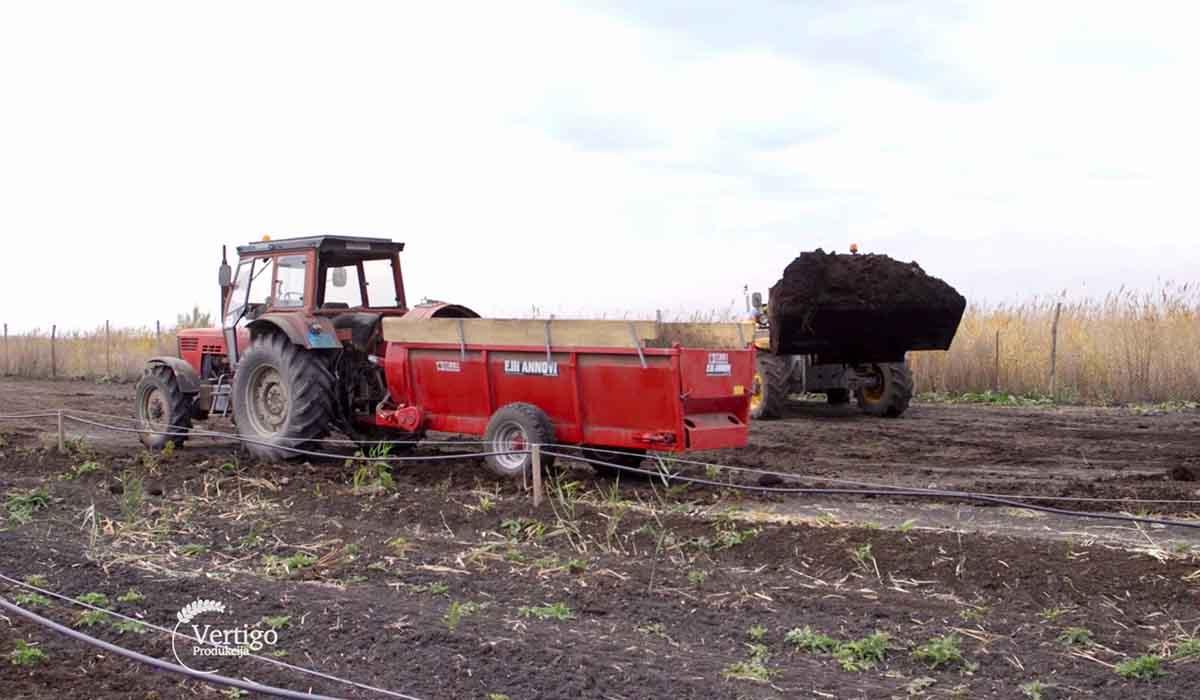 Agrosaveti - Uzgoj lešnika u Zrenjaninu 01