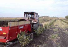 Agrosaveti - Uzgoj lešnika u Zrenjaninu 03