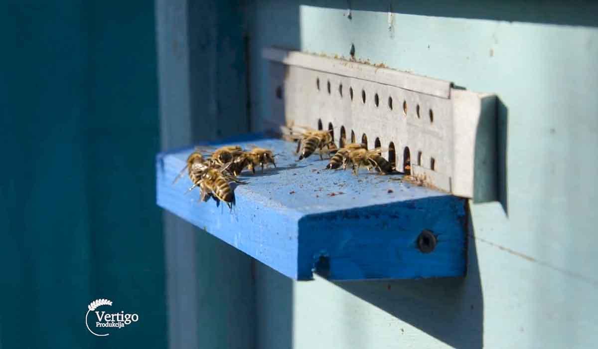 Agrosaveti - Uzgoj pčela u Savinom Selu 2