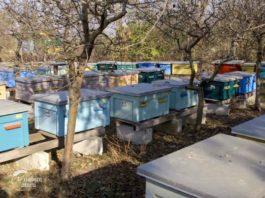 Agrosaveti - Uzgoj pčela u Savinom Selu 3