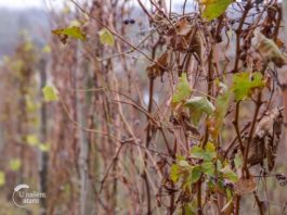 Agrosaveti - Vinski viteški red 04