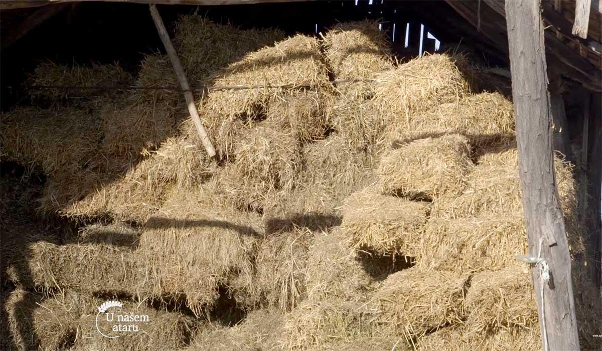Agrosaveti---Farma-krava-Donja-Badanja---04