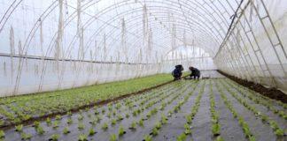 Agrosaveti---Plastenicka-proizvodnja-povrca---01