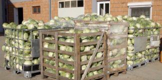 Agrosaveti---Proizvodnja-kiselog-kupusa---02
