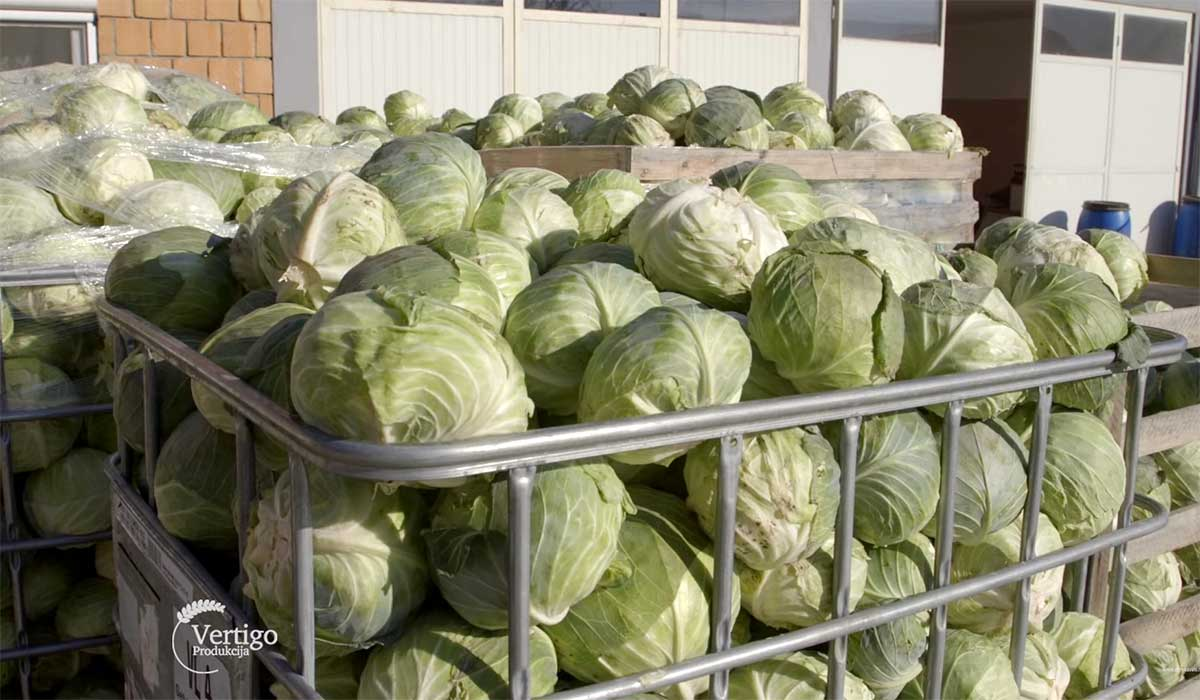 Agrosaveti---Proizvodnja-kiselog-kupusa---03