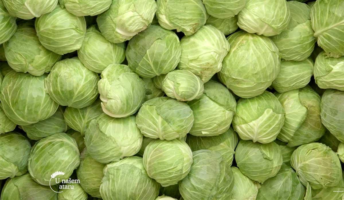 Agrosaveti---Proizvodnja-kiselog-kupusa---04