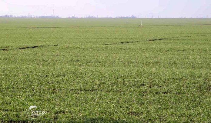 Agrosaveti - Stanje ozimih useva u Vrbasu 04