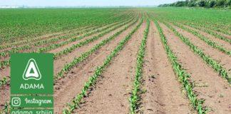 Agrosaveti---Adama---Kukuruz---Proizvodnja---Zastita---Herbicidi-02