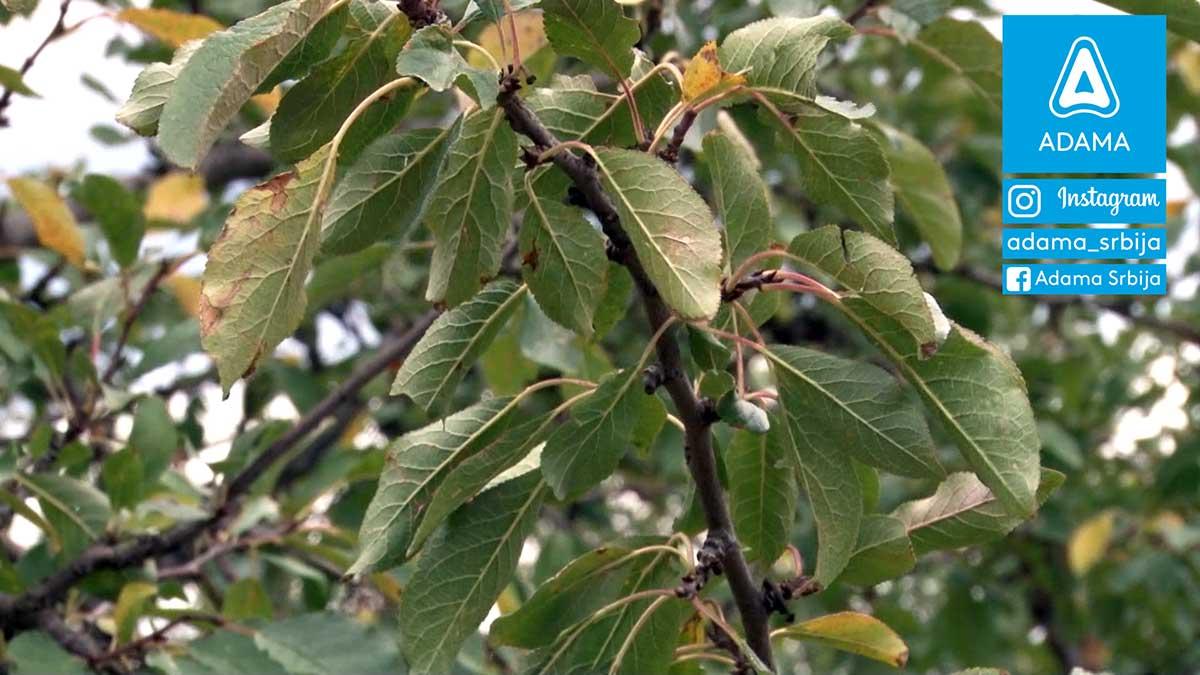 Agrosaveti---Adama---Sljiva---bolesti---stetocine-01