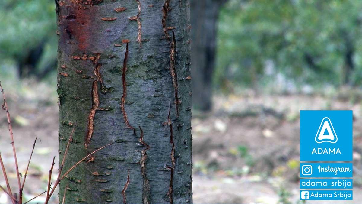 Agrosaveti---Adama---Sljiva---bolesti---stetocine-02