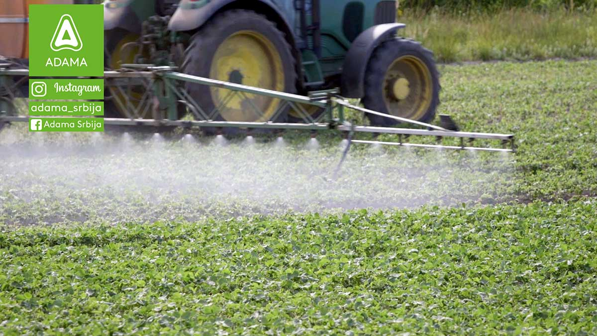 Agrosaveti---Adama---Soja---Proizvodnja---Uslovi-za-gajenje---Seme---Setva-01