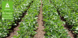 Agrosaveti---Adama---Soja---Proizvodnja---Uslovi-za-gajenje---Seme---Setva-02