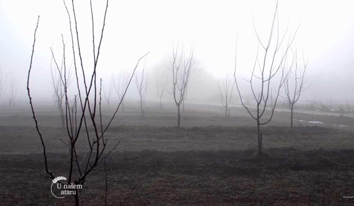 Agrosaveti---Mladi-zasadi-voca-u-Sumadiji---01