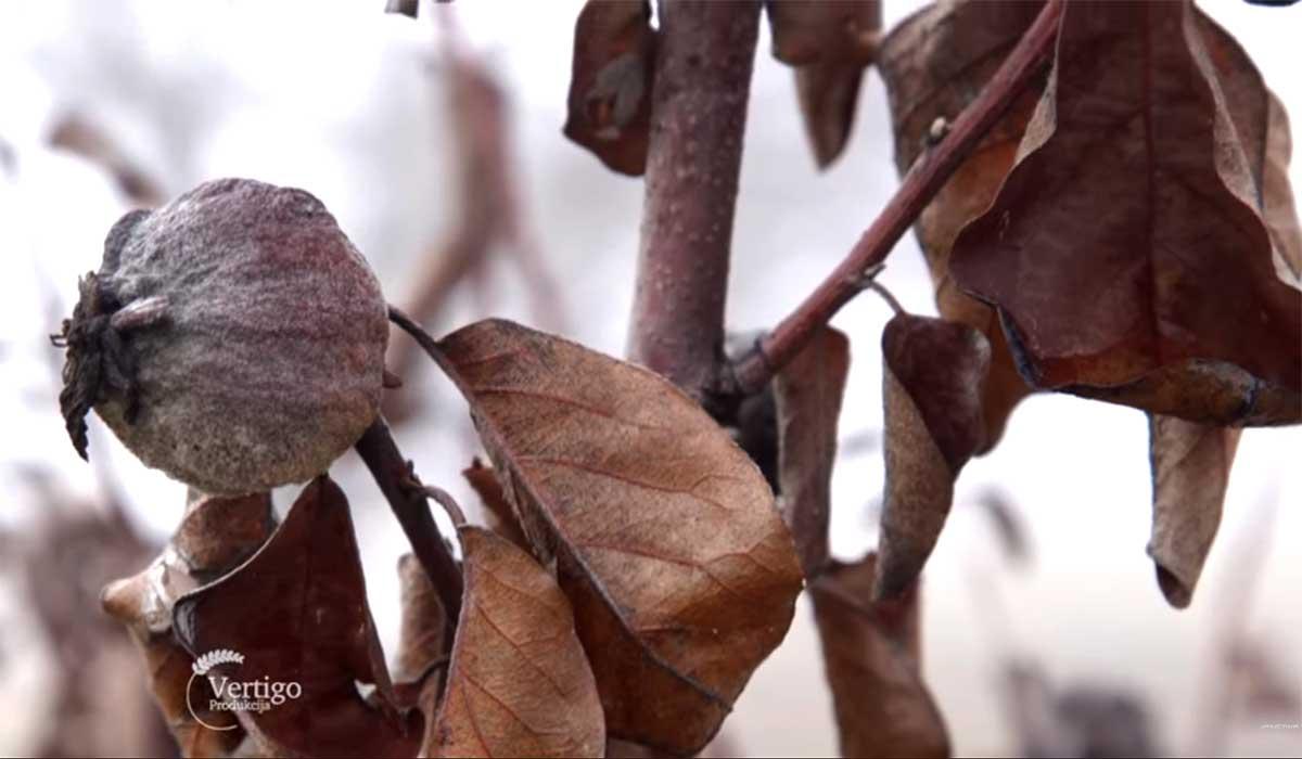 Agrosaveti---Mladi-zasadi-voca-u-Sumadiji---04