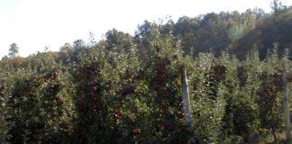 Agrosaveti---Ocena-vocarske-sezone---01