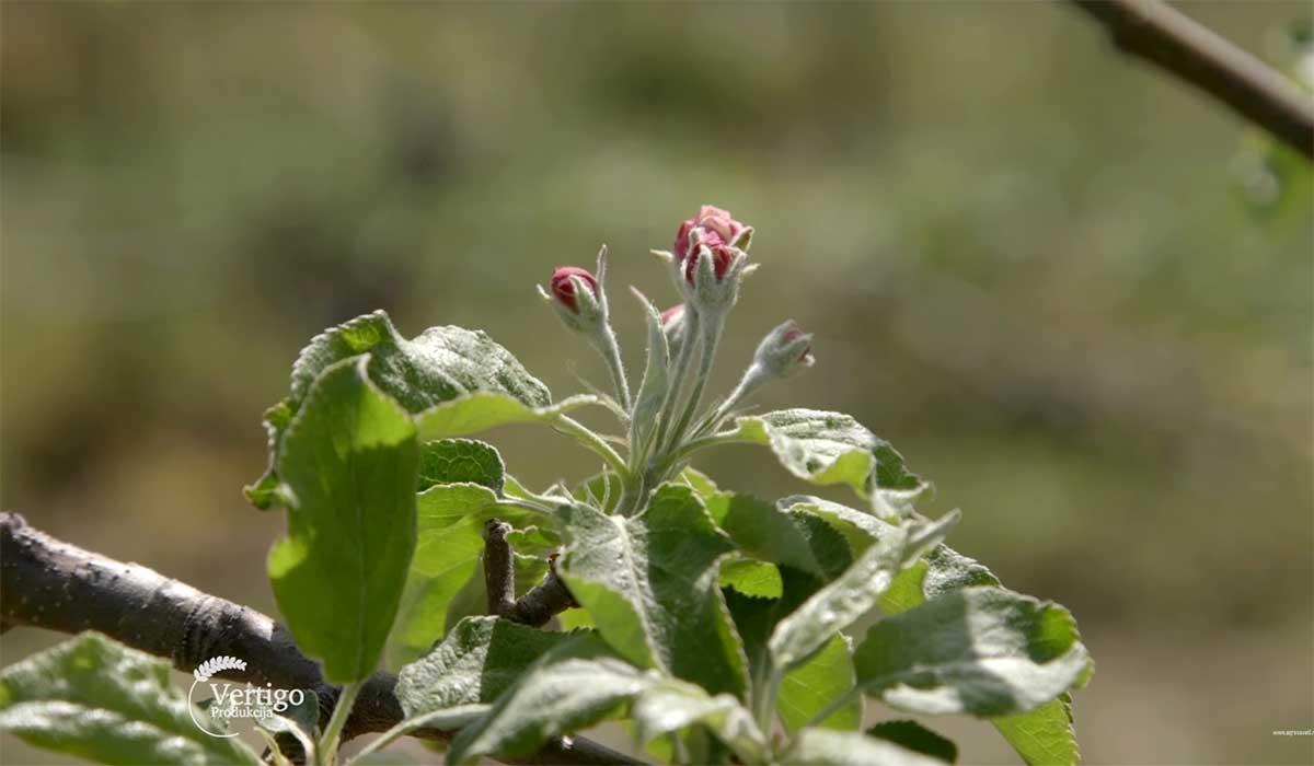 Agrosaveti---Primena-bioregulatora-u-vocarstvu---02