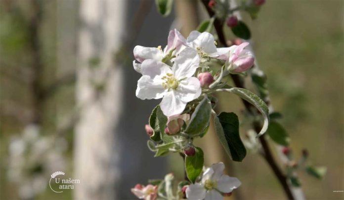 Agrosaveti---Primena-bioregulatora-u-vocarstvu---03