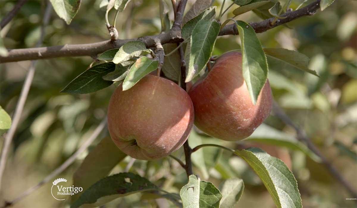 Agrosaveti---Primena-bioregulatora-u-vocarstvu---04