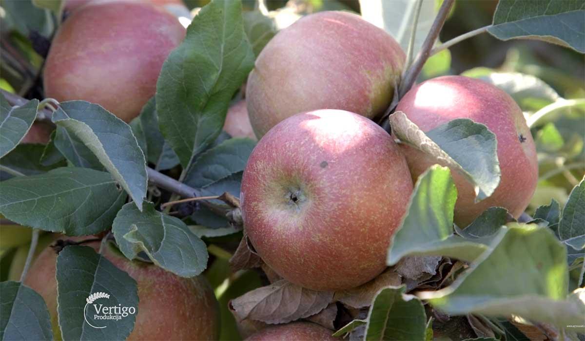 Agrosaveti---Primena-bioregulatora-u-vocarstvu---05