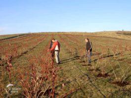 Agrosaveti---Saveti-strucnjaka-pomoravskog-okruga---01