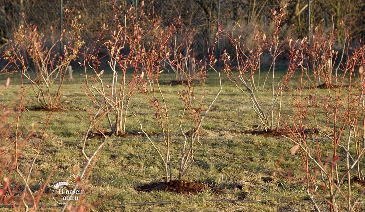Agrosaveti---Saveti-strucnjaka-pomoravskog-okruga---02