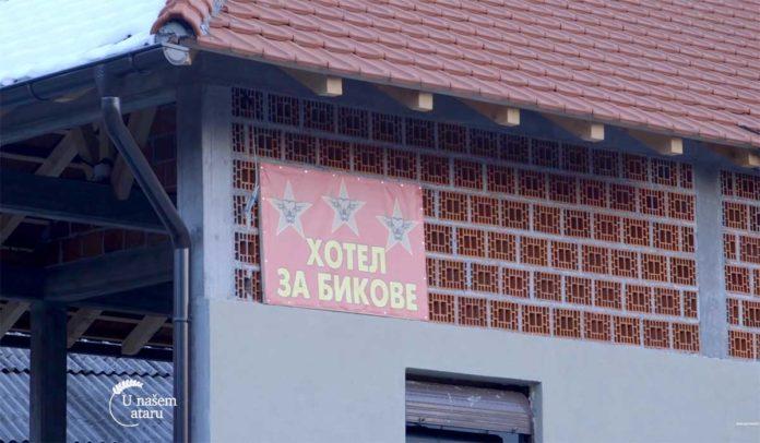 Agrosaveti---Tov-junadi-u-Donjem-Dobricu---01