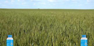 Agrosaveti---Adama---Bumper-P---Zamir---Psenica---Jecam---01