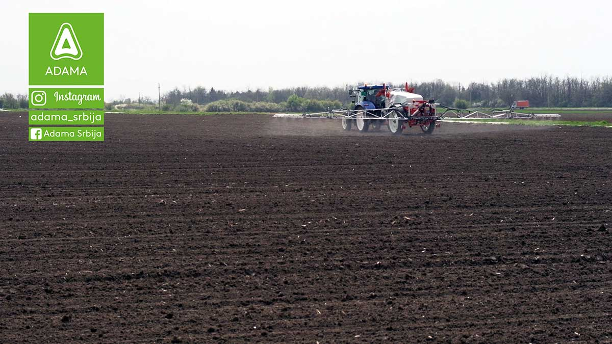 Agrosaveti---Adama---Suncokret---Proizvodnja---Prskanje-na-crno---Seme---Setva